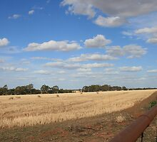 On the Farm, Wycheproof, Victoria by Vicki-lee