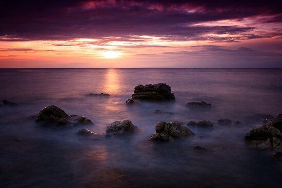 Purple Delight - Caithness, Scotland by Martina Cross