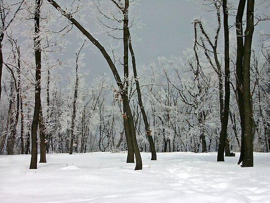 Crystallized trees in snowy Dobogókő, Hungary by ShotsOfLove