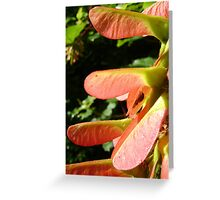spider & seeds Greeting Card