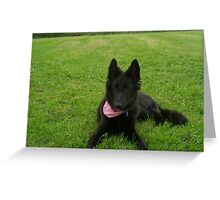Adorable Belgian Shepherd Groenendael Greeting Card