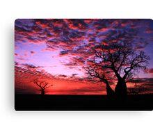Sunset Boab Canvas Print