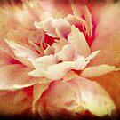 Fading Beauty by Anji Johnston