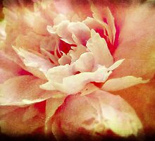 Fading Beauty by Anji Johnston
