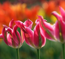 Fired Tulips by Fortish