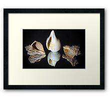 Conch shells Framed Print