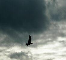 Crossing the sky by robdavies