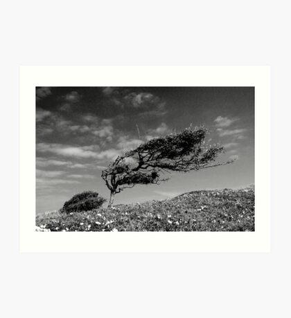 Wild Cornish Bonsai Art Print