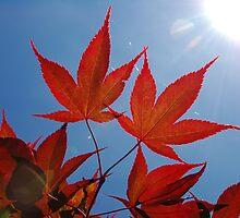 Red Leaves - Blue Sky by James Stevens