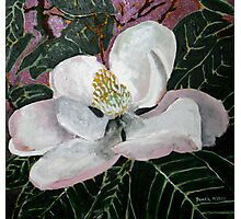 magnolia flower acrylic painting Photographic Print