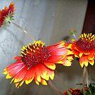 Three flowers... by Ana Belaj