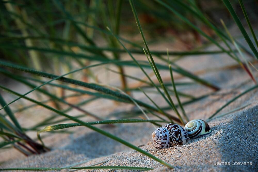 Shells at Crantock by James Stevens