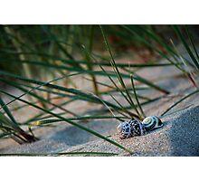 Shells at Crantock Photographic Print