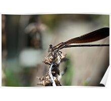 Bug Eats Bug Poster
