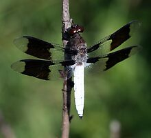 Dragonfly #2 by ericb