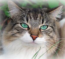 Kitty by anna mark