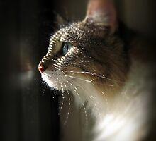 Kitty Profile by anna mark