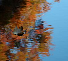 Floating Leaf, Fall Color by Reno Unger