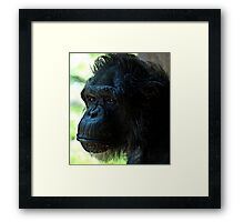 Monkey Framed Print