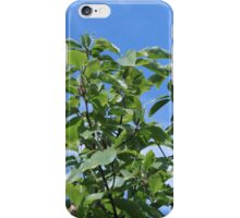 Summer magnolia green leaves in blue sky.  iPhone Case/Skin