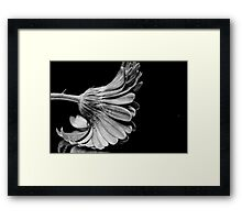 Flower in Black and white. Framed Print