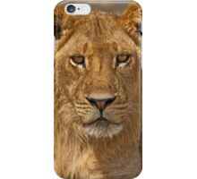 Young Lion (Panthera leo) iPhone Case/Skin