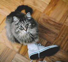 seattle cat. by Stephanie Welling