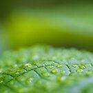Macro leaf... by CJ B