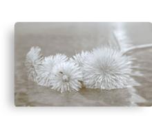 Floating Dandelions Canvas Print
