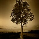 Lone Tree by craigmason
