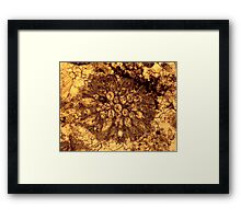 Bryozoan fossil thin-section from Usk, Monmouthshire Framed Print
