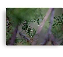 Macro Wet Evergreen Canvas Print