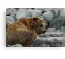 Silly Grizzly Canvas Print