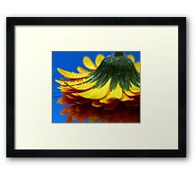 A yellow flower. Framed Print