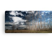 Manning River Drive HDR Canvas Print