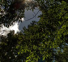 Tree Sunburst by Aaron Campbell