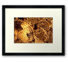 Brachiopod fossils in thin-section from Usk, Monmouthshire Framed Print