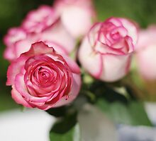 Rosey Dream by Susan Gary