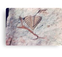 Trilobite and bryozoan fossils from Usk, Monmouthshire Canvas Print