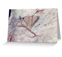 Trilobite and bryozoan fossils from Usk, Monmouthshire Greeting Card