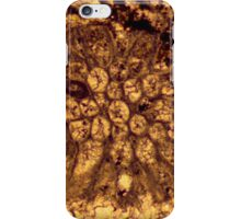 Bryozoan fossil thin-section from Usk, Monmouthshire iPhone Case/Skin
