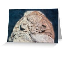 Dalmanites (trilobite) cephalis fossil from Usk, Monmouthshire Greeting Card