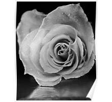 Black and white rose. Poster