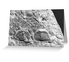 Trilobite and brachiopod fossils from Usk, Monmouthshire Greeting Card