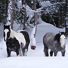winter woes by wnichol