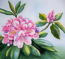 """""""Rhododendron Beauties""""  by Mae Pilon"""