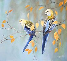 Pale Headed Rosellas by eric shepherd