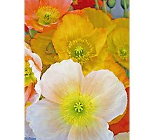 Papery Poppies Photographic Print