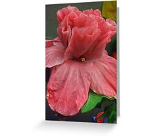 CUP and SAUCER - HIBISCUS Greeting Card