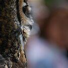 Owl by Rowan  Lewgalon